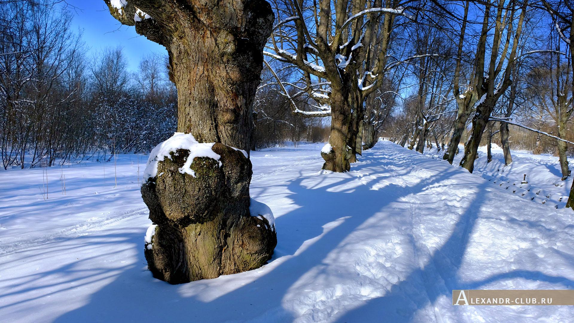 Петергоф, Луговой парк, зима, аллея Неожиданных деревьев – 1