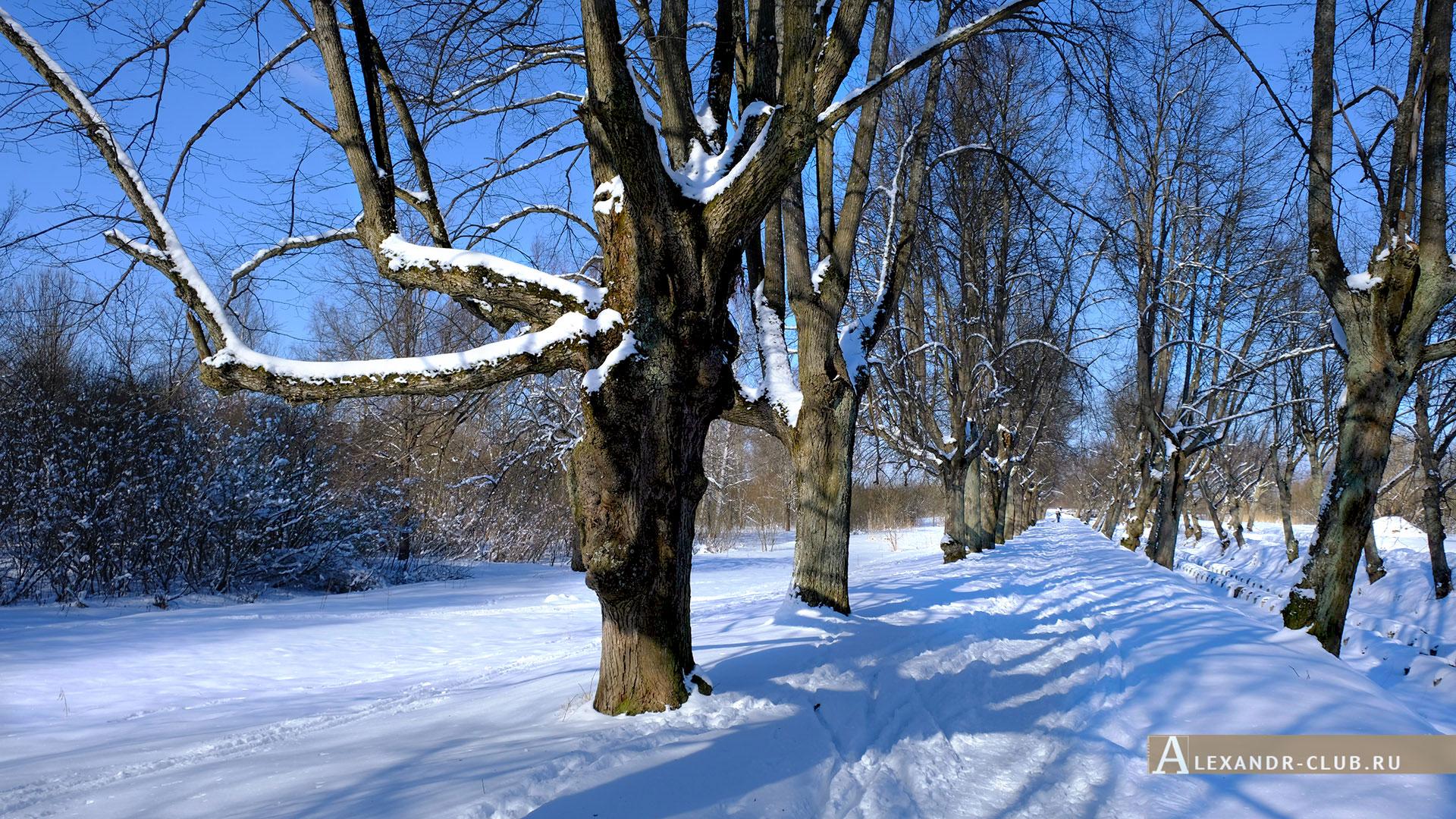 Петергоф, Луговой парк, зима, аллея Неожиданных деревьев – 2