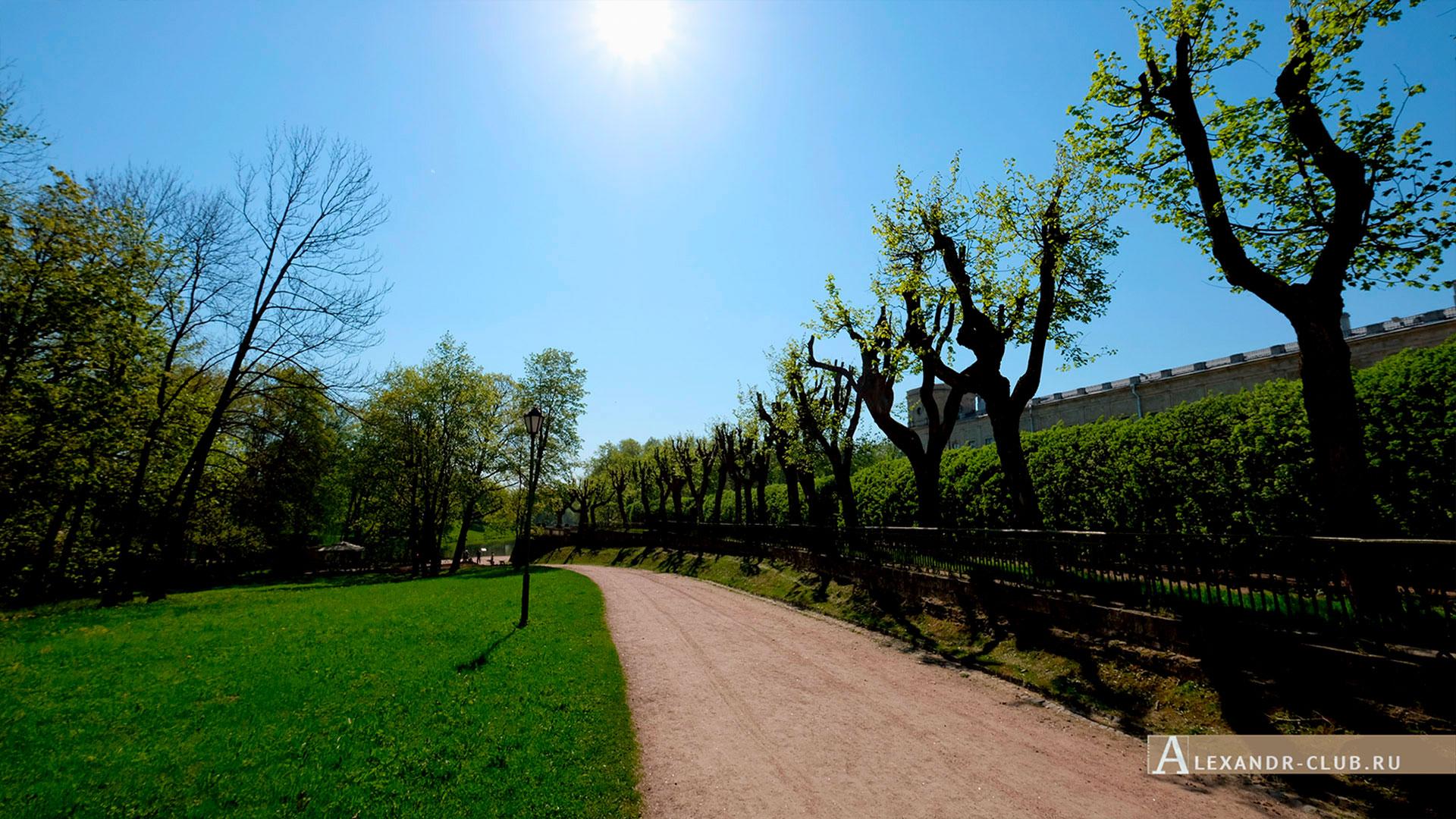 Гатчинский парк, весна, аллея вдоль Собственного садика