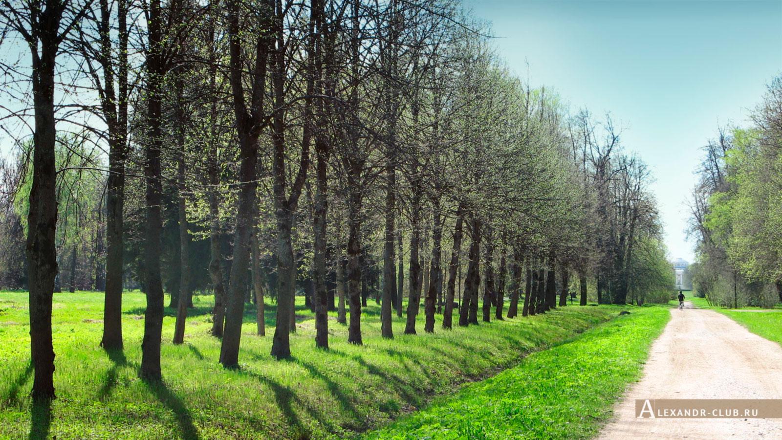 Павловский парк, весна, Ижорская аллея