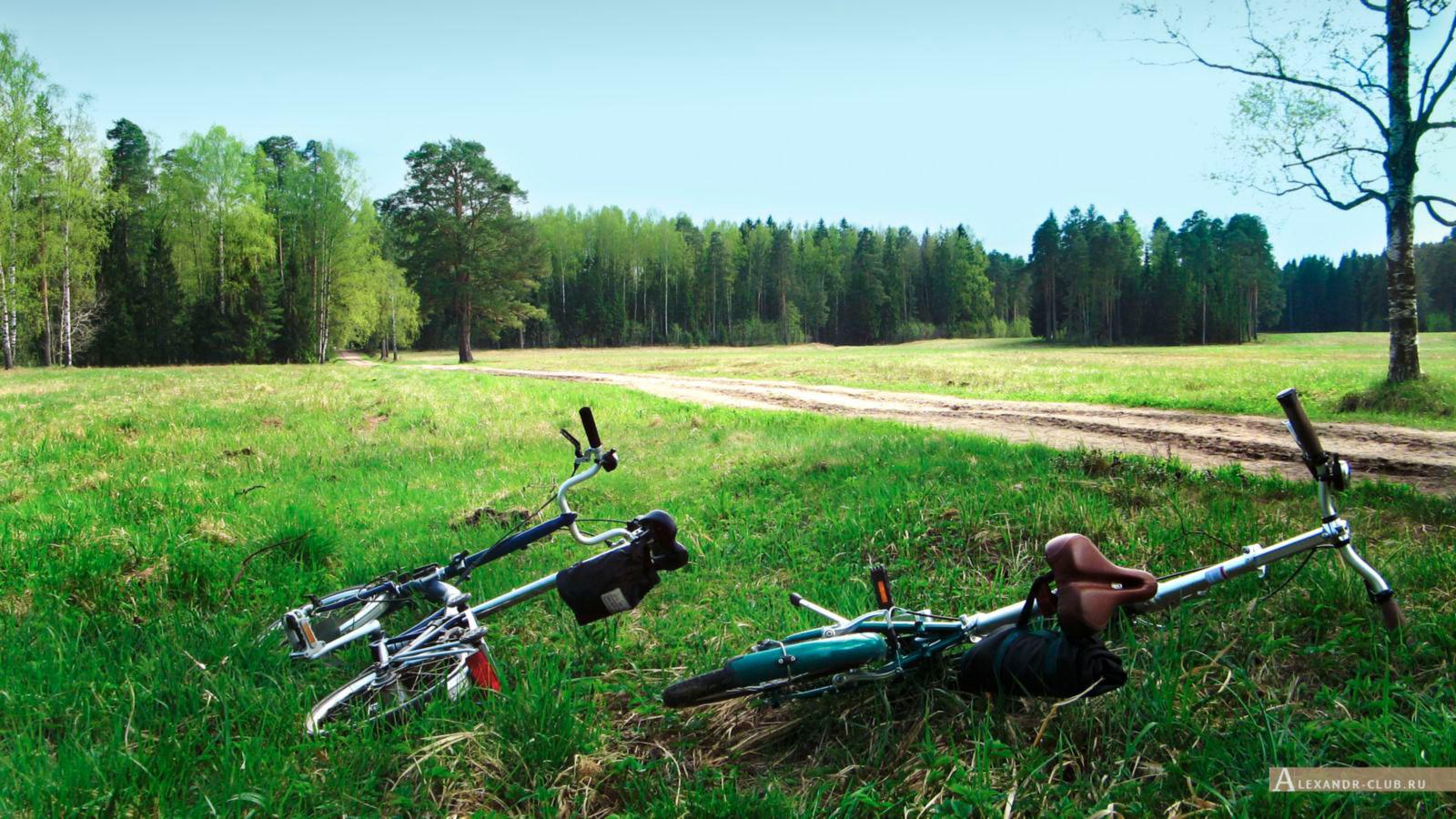 Павловский парк, весна, «Самое красивое место» – 2