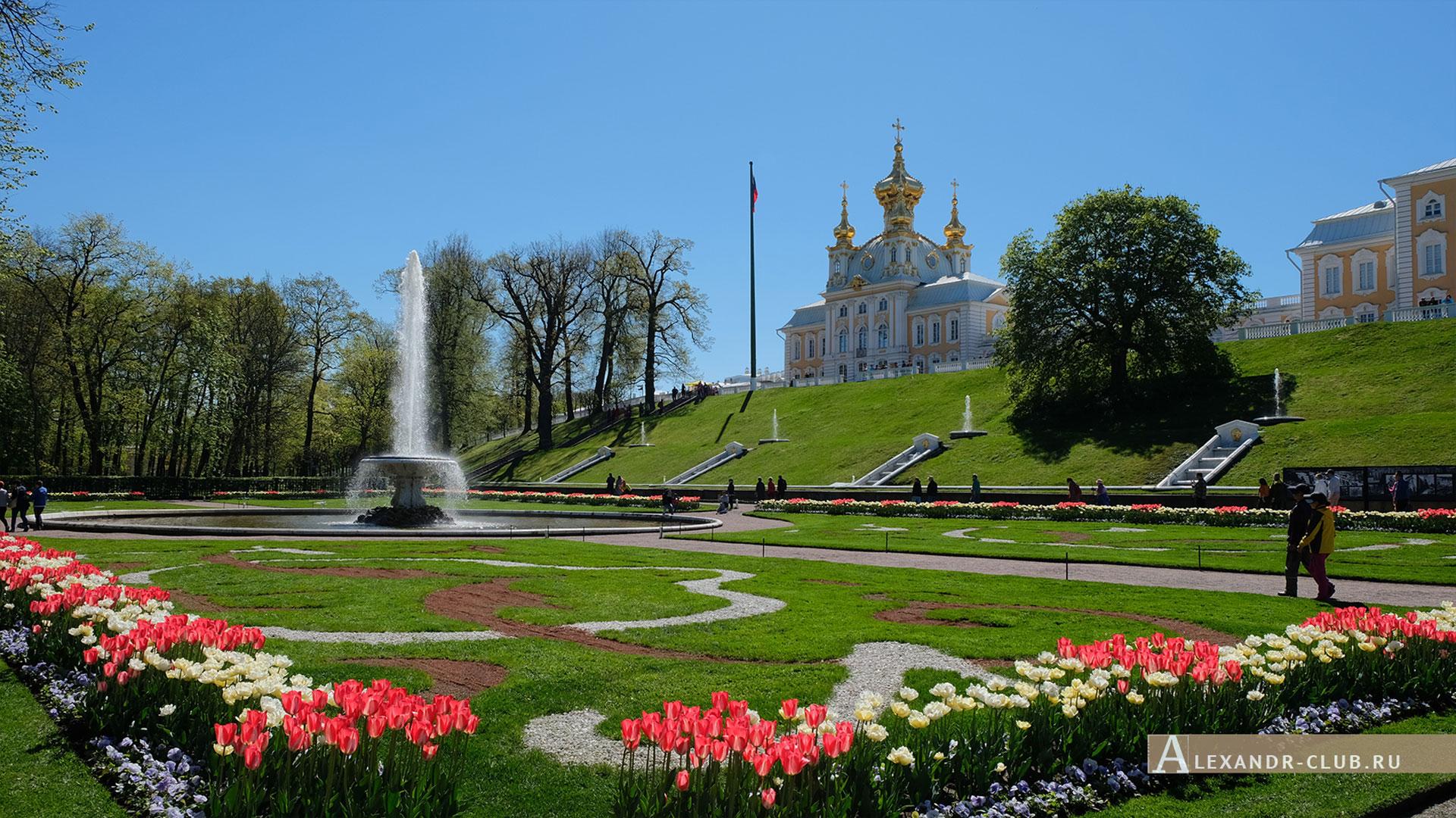 Петергоф, весна, Нижний парк, фонтан «Чаша», Церковный корпус Большого дворца