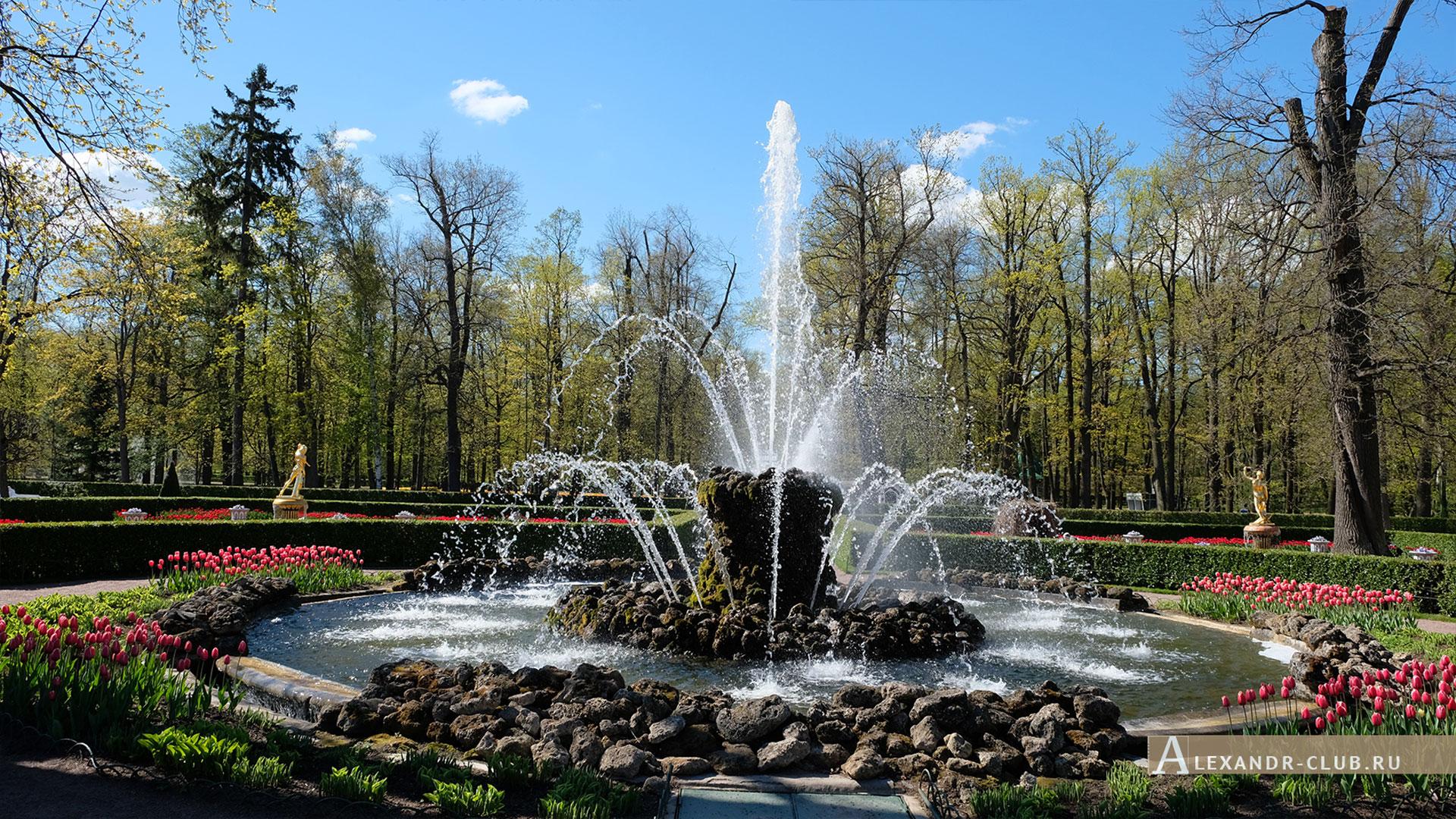 Петергоф, весна, Нижний парк, Монплезир, фонтан «Сноп»