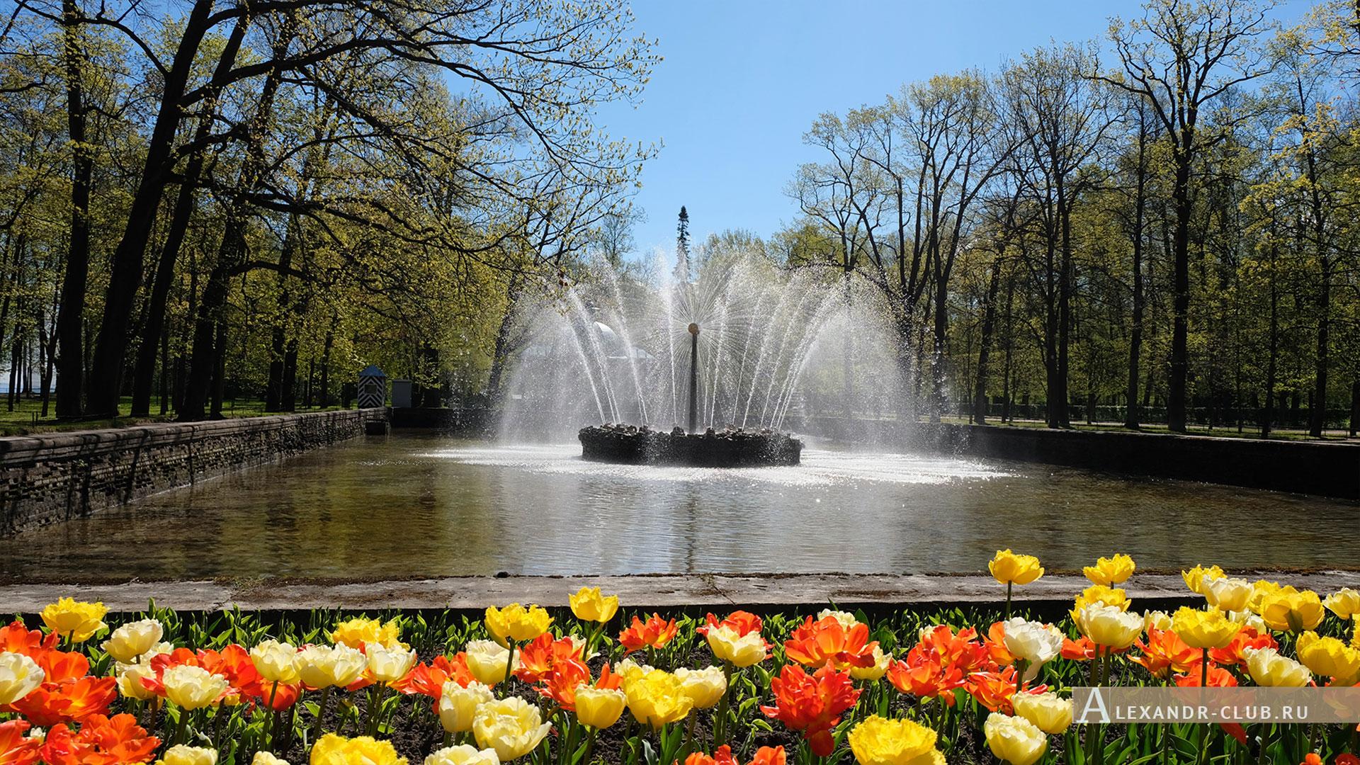 Петергоф, весна, Нижний парк, фонтан «Солнце»