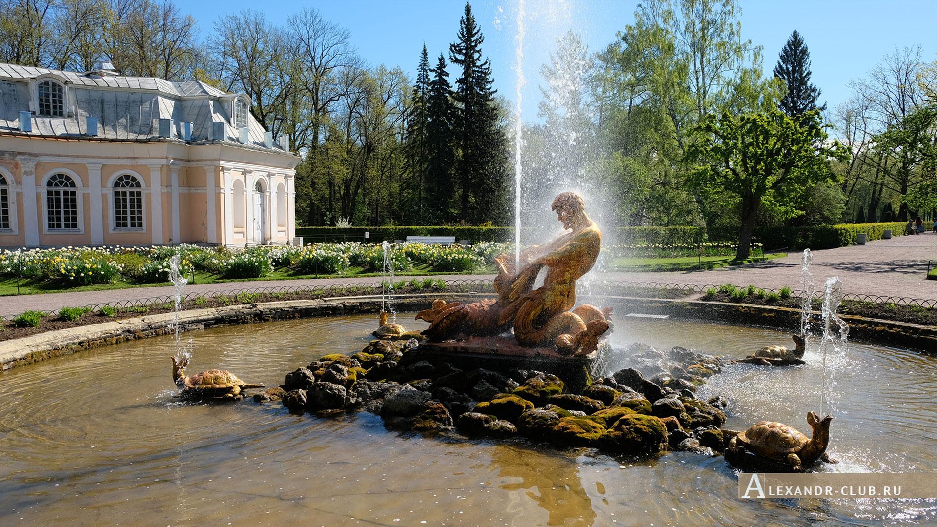 Петергоф, весна, Нижний парк, фонтан «Оранжерейный»