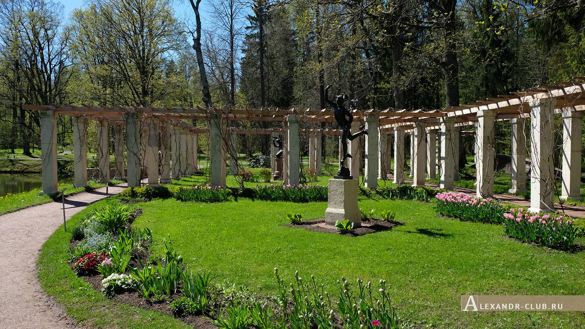 Ораниенбаум, весна, пергола