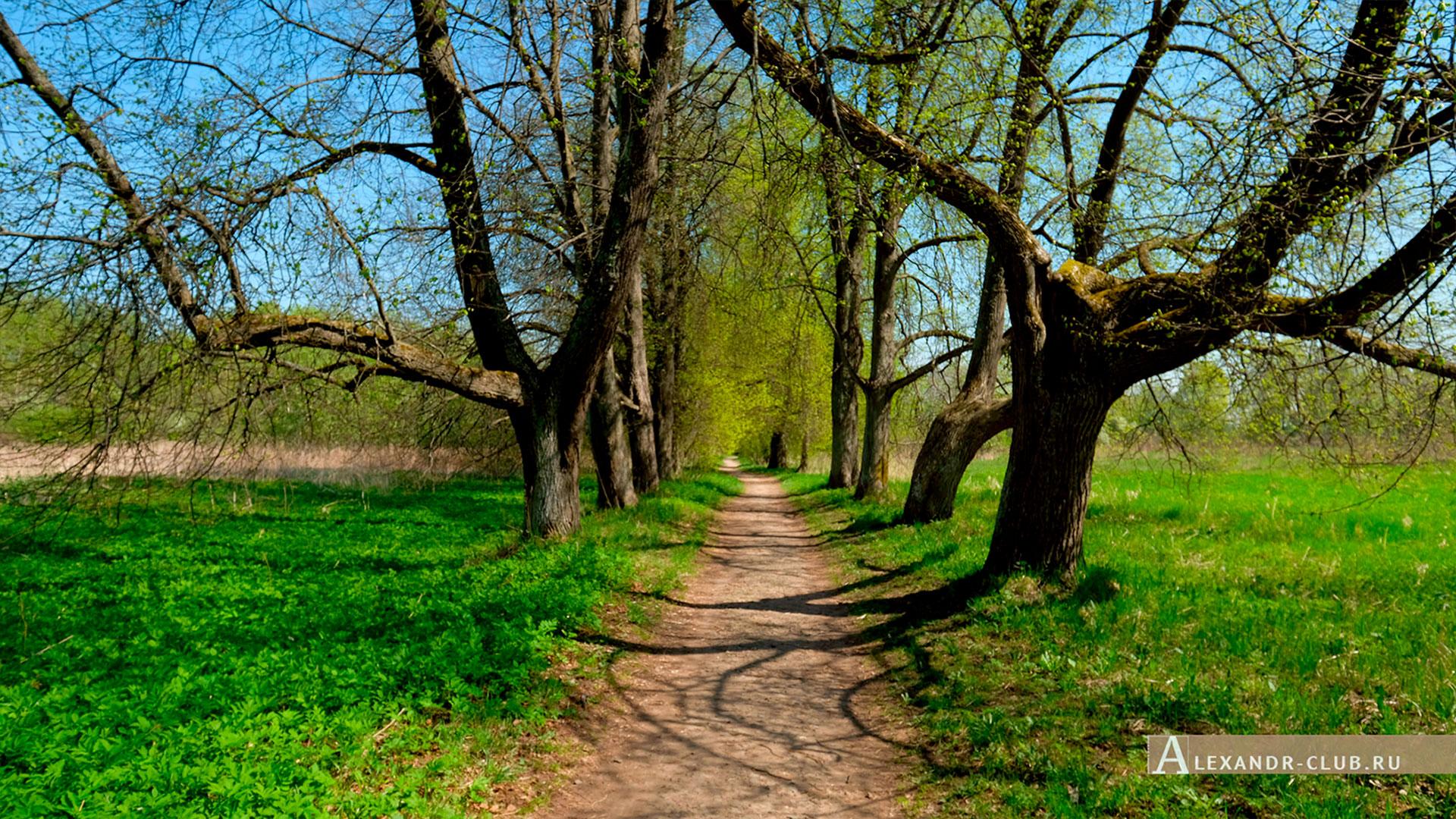 Петергоф, Луговой парк, весна, Липовая аллея