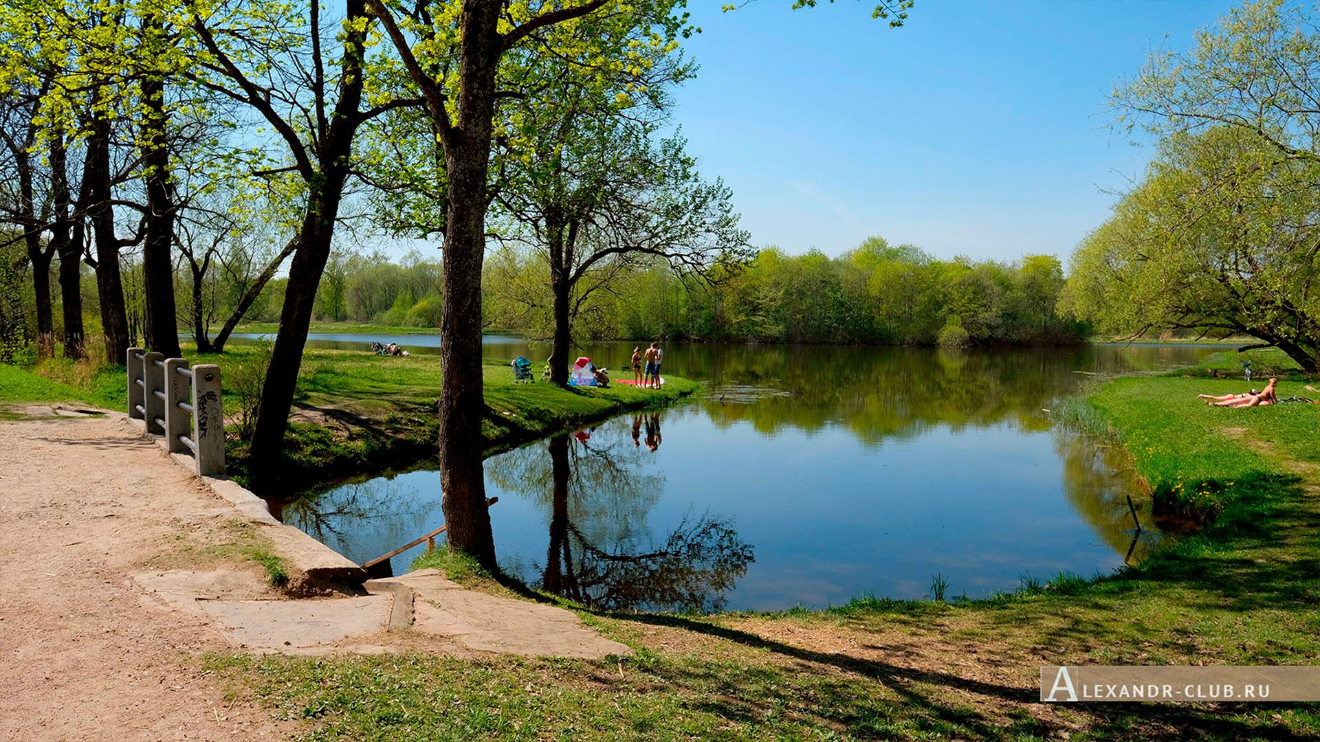 Петергоф, Луговой парк, весна, мостик на Орлинском пруду – 3