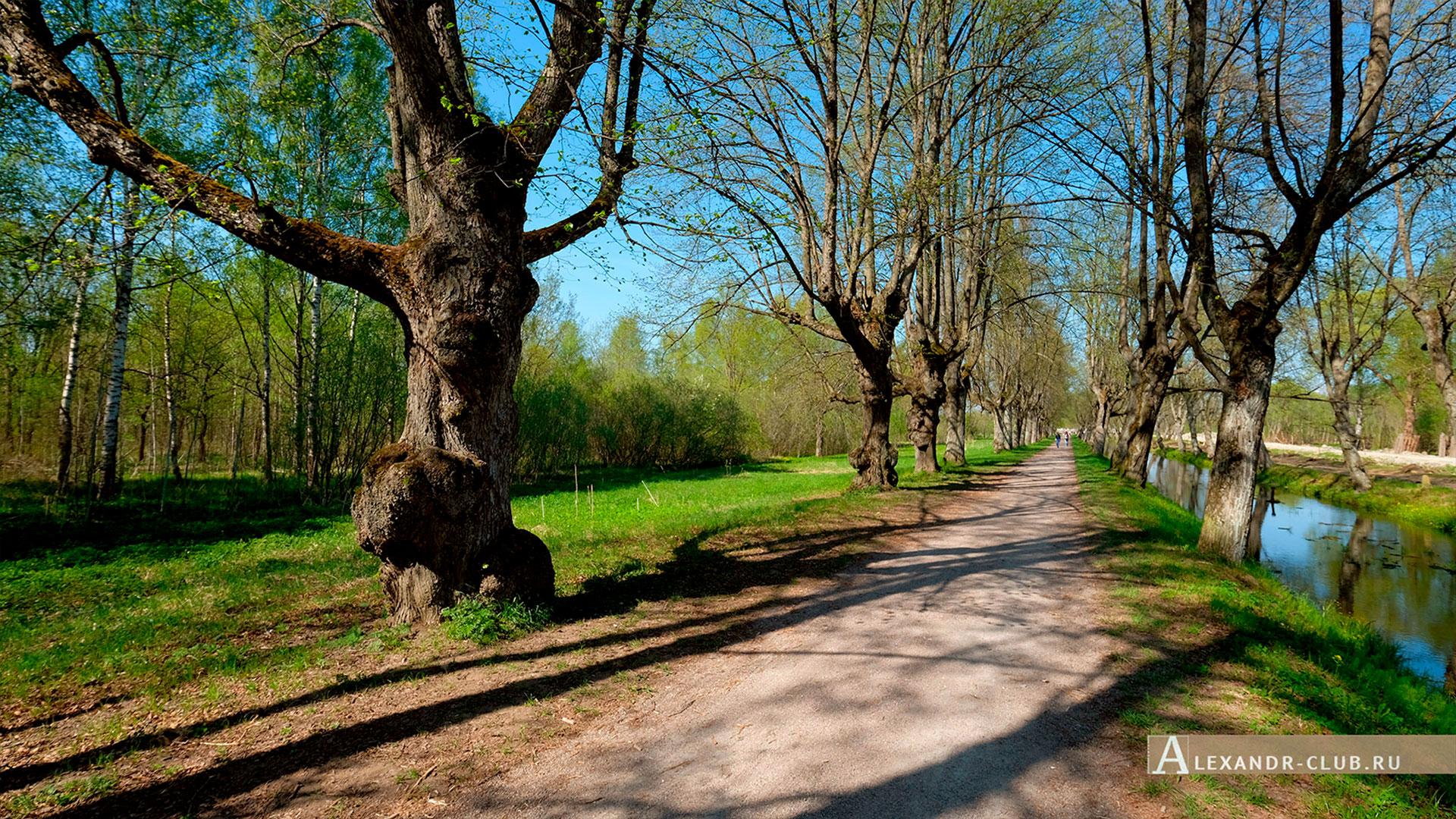 Петергоф, Луговой парк, весна, аллея Неожиданных деревьев