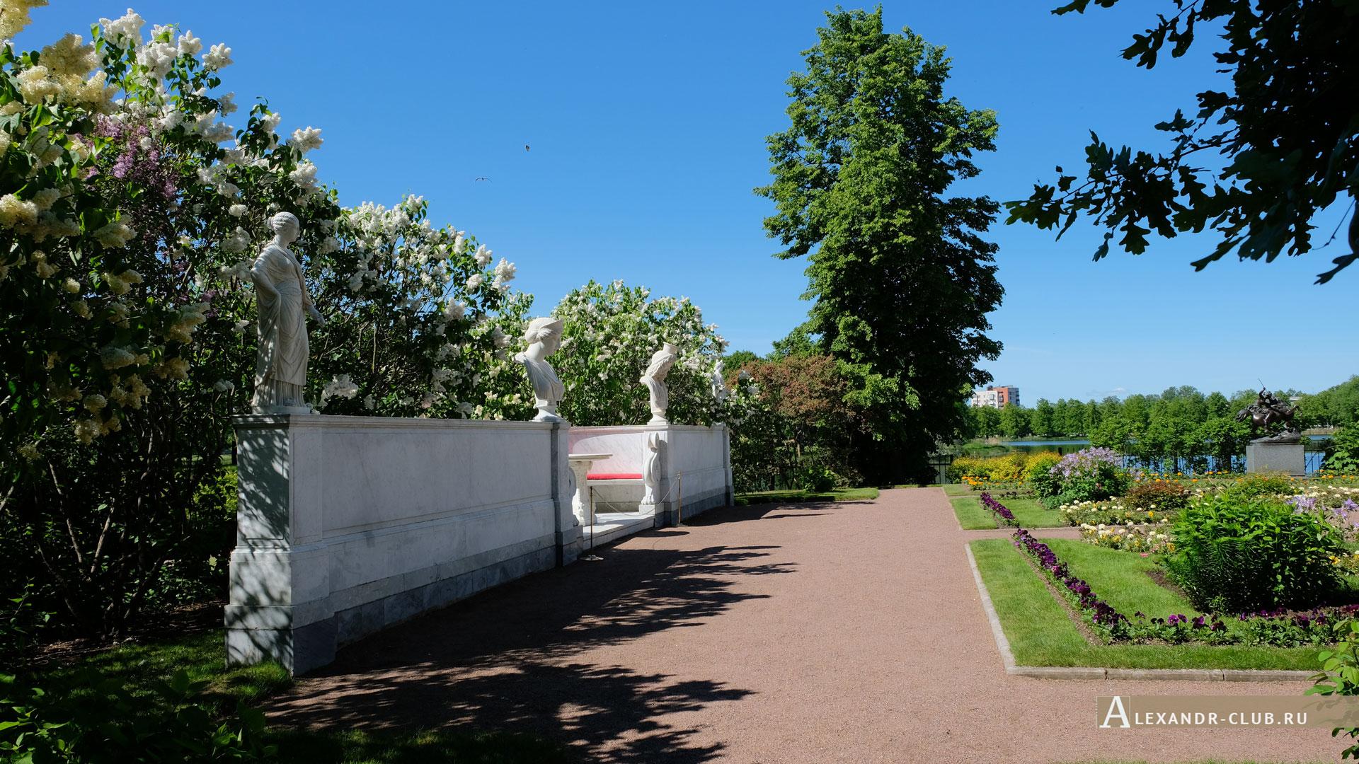 Петергоф, Колонистский парк, лето, Царицын павильон, Мраморная скамья