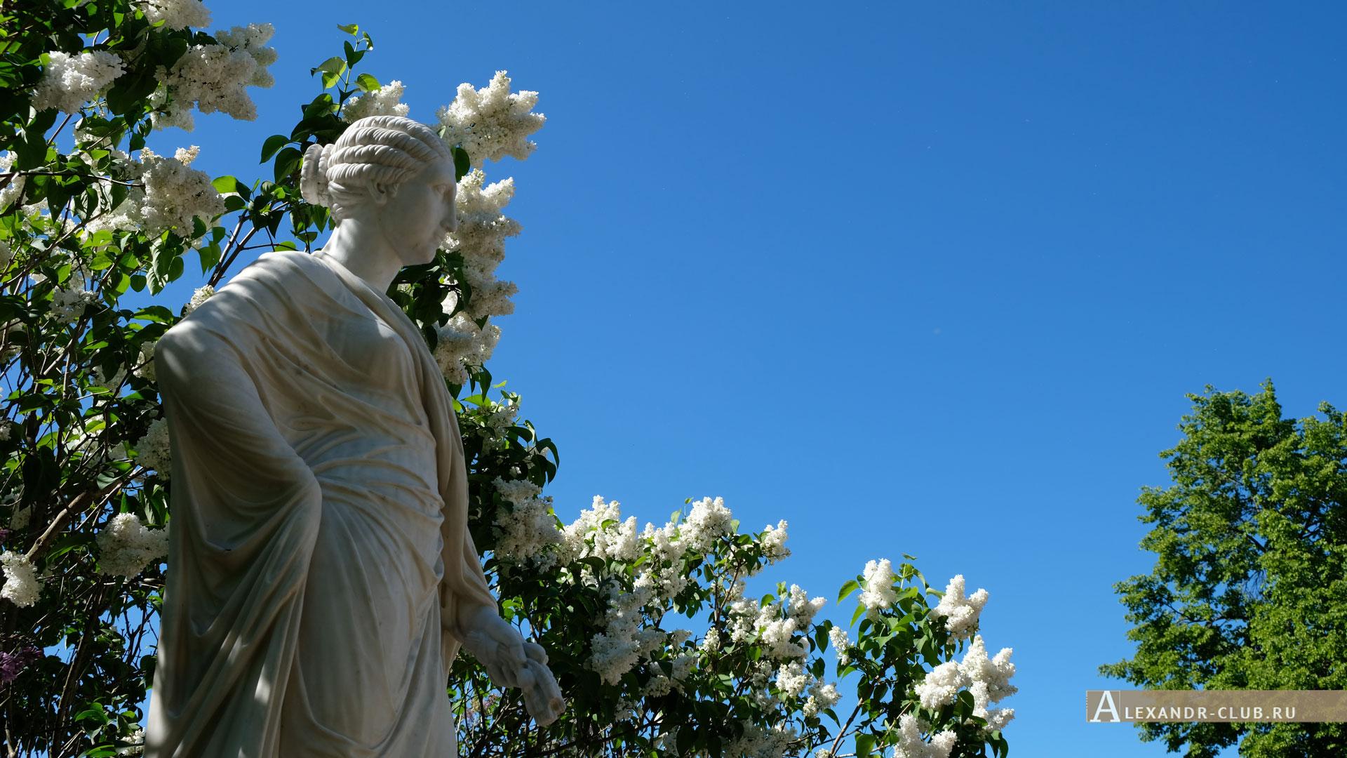 Петергоф, Колонистский парк, лето, Царицын павильон, Мраморная скамья, статуя Цереры