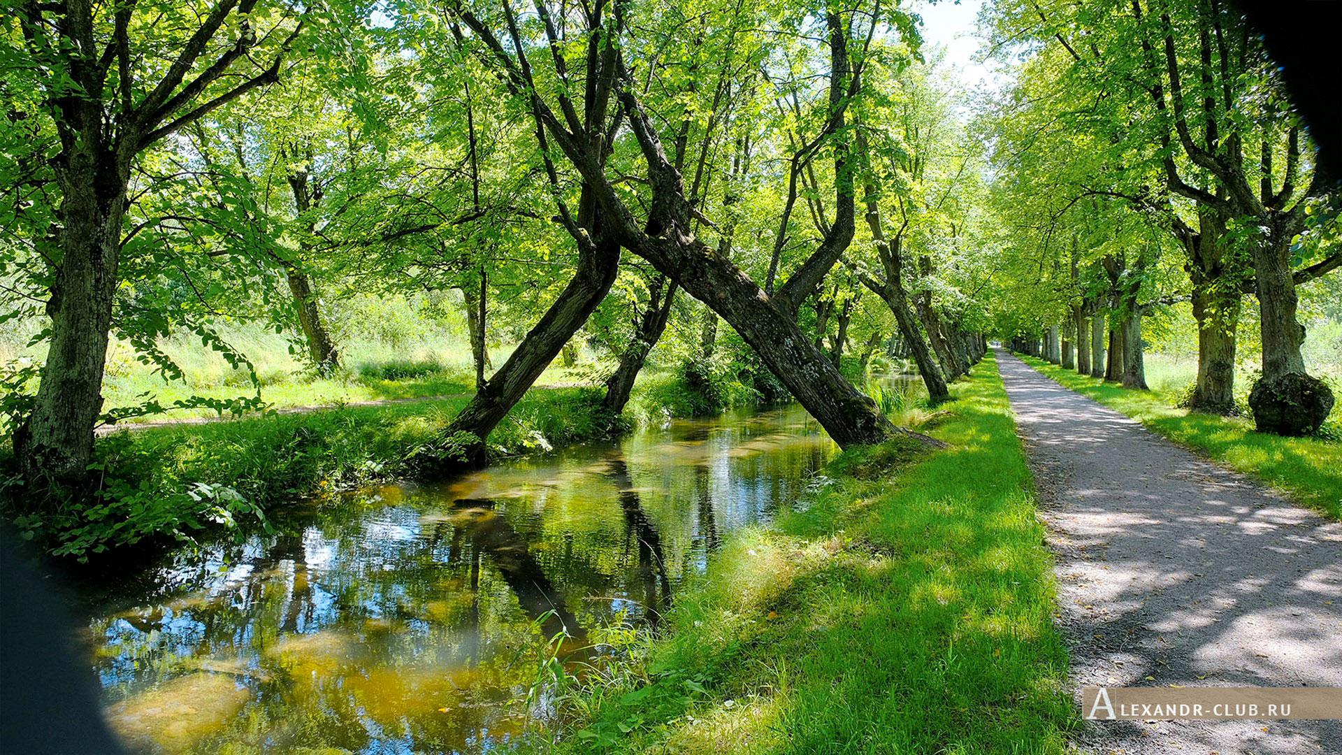 Петергоф, Луговой парк, лето, Самсониевский канал