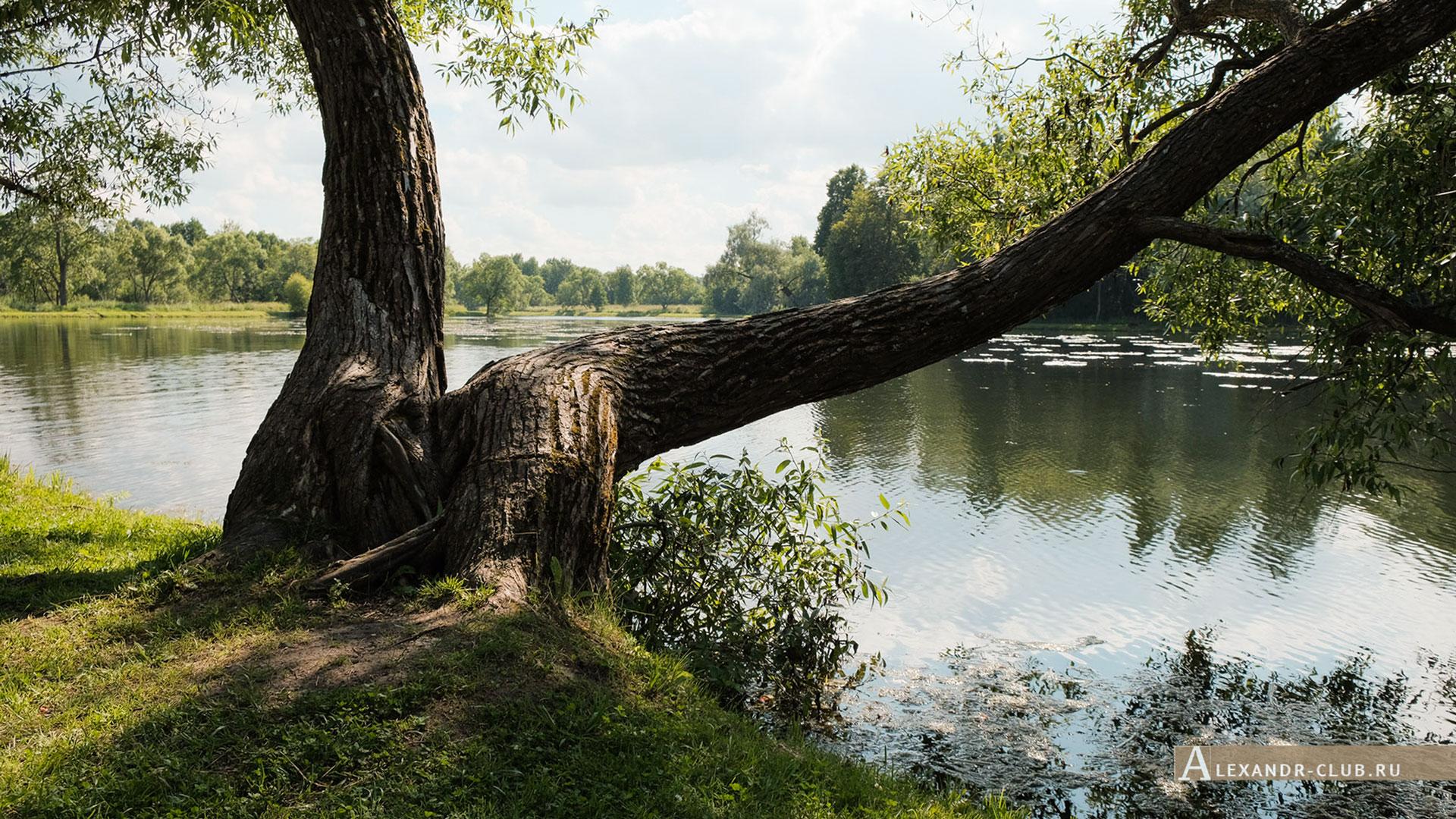 Петергоф, Луговой парк, лето, Никольский пруд