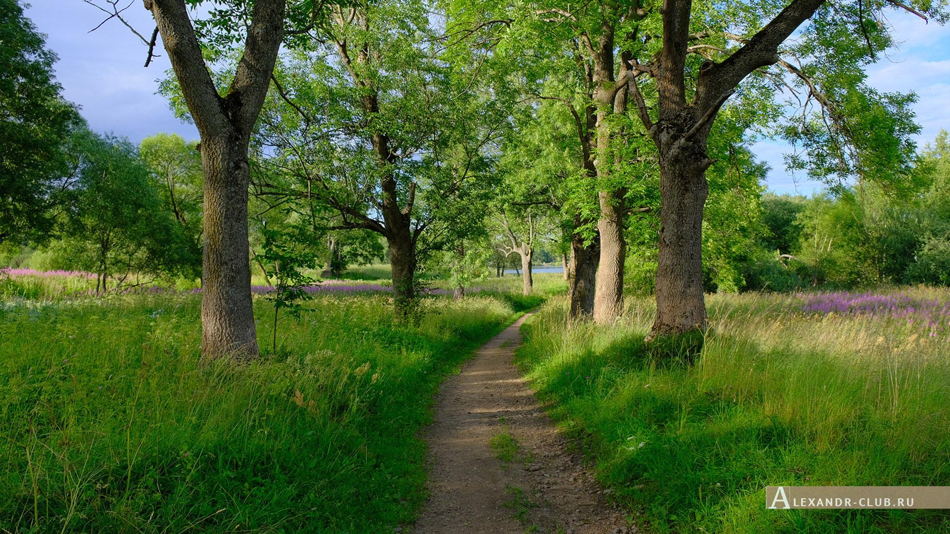 Петергоф, Луговой парк, лето, аллея у реки Шинкарка