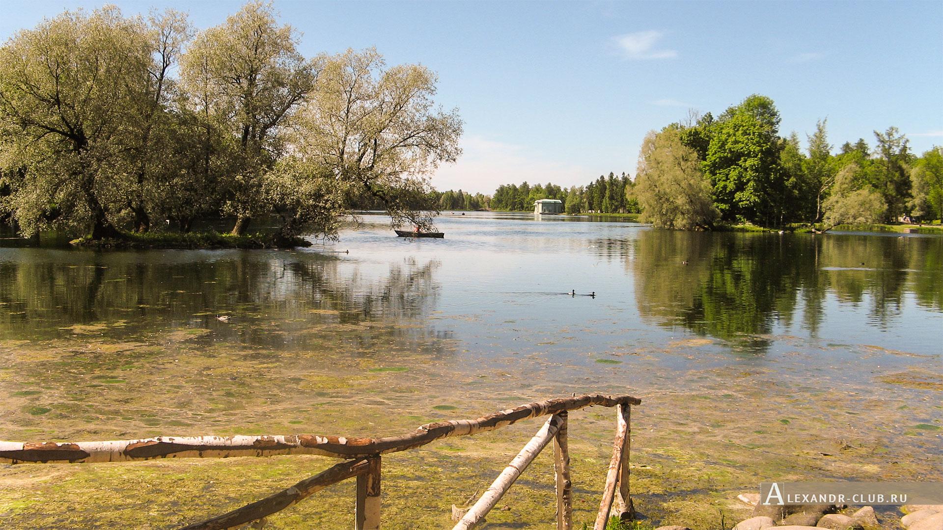 Гатчинский парк, лето, Белое озеро