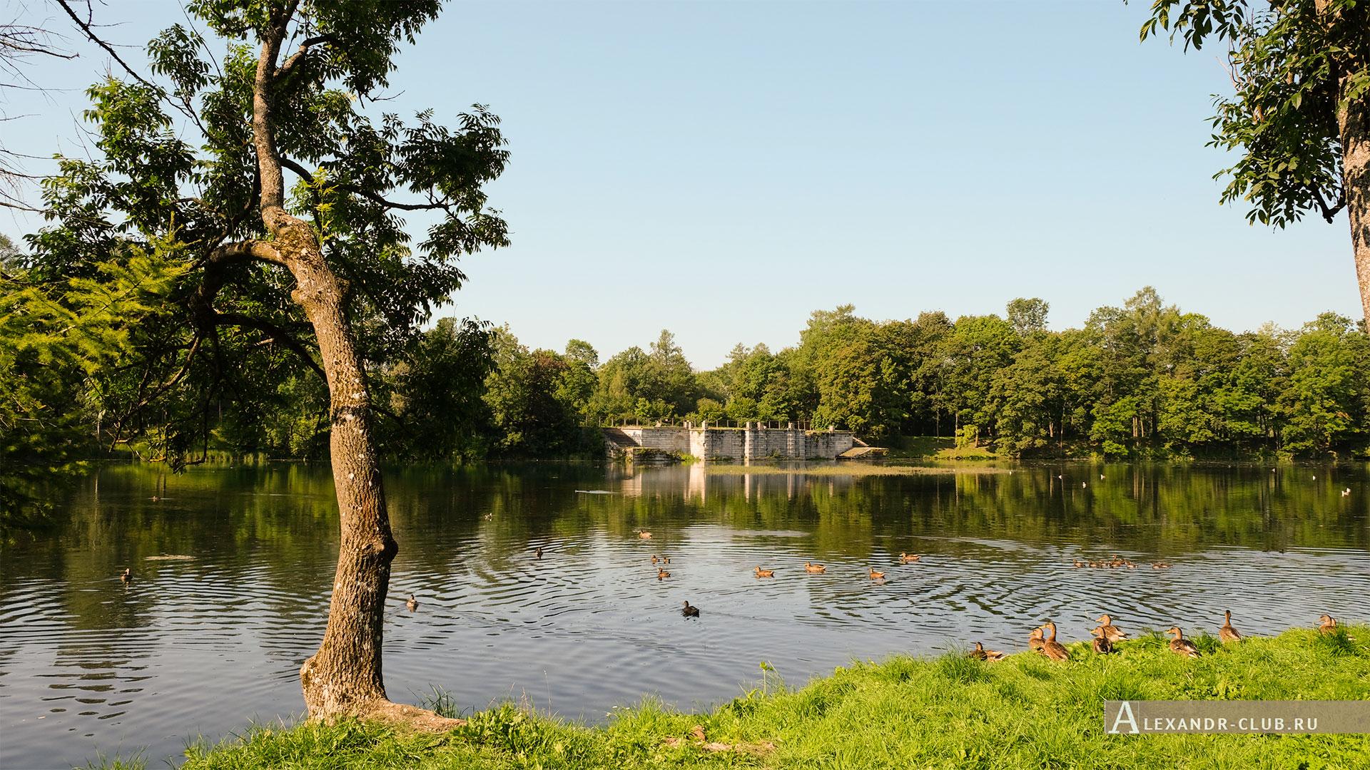 Гатчинский парк, лето, Белое озеро и Большая терраса-пристань