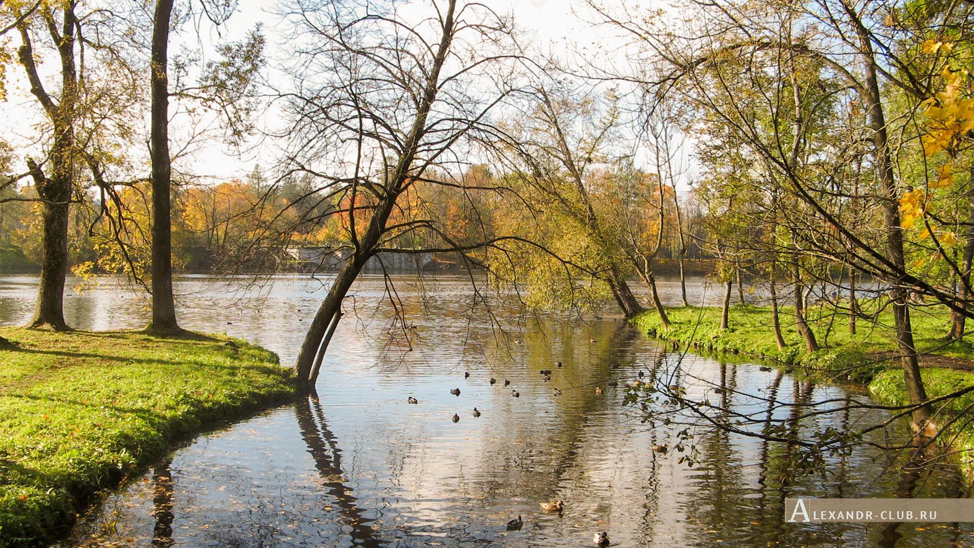 Гатчина, Гатчинский парк, осень, Белое озеро и Водный лабиринт