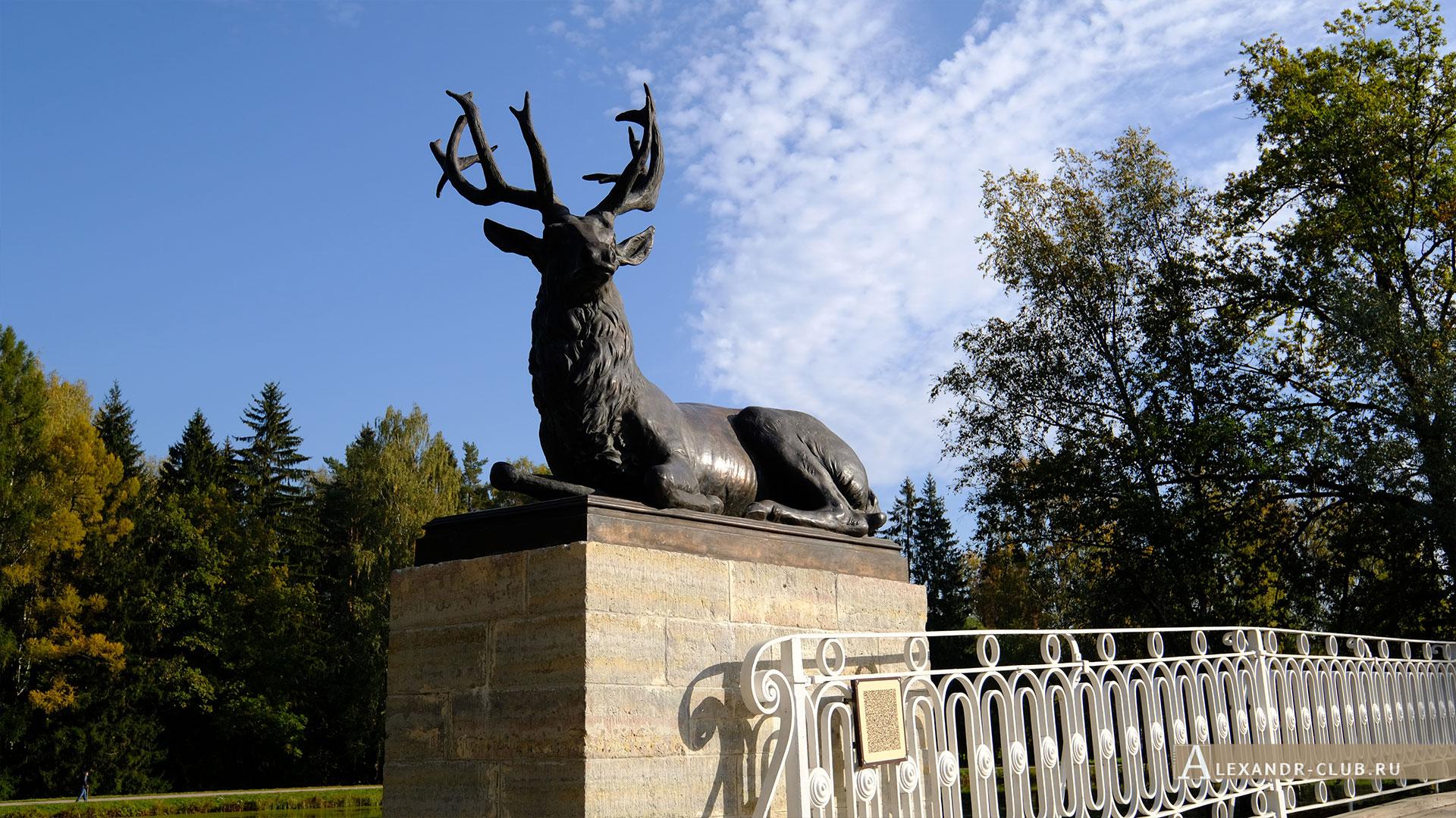 Павловск, осень, Павловский парк, Олений мост