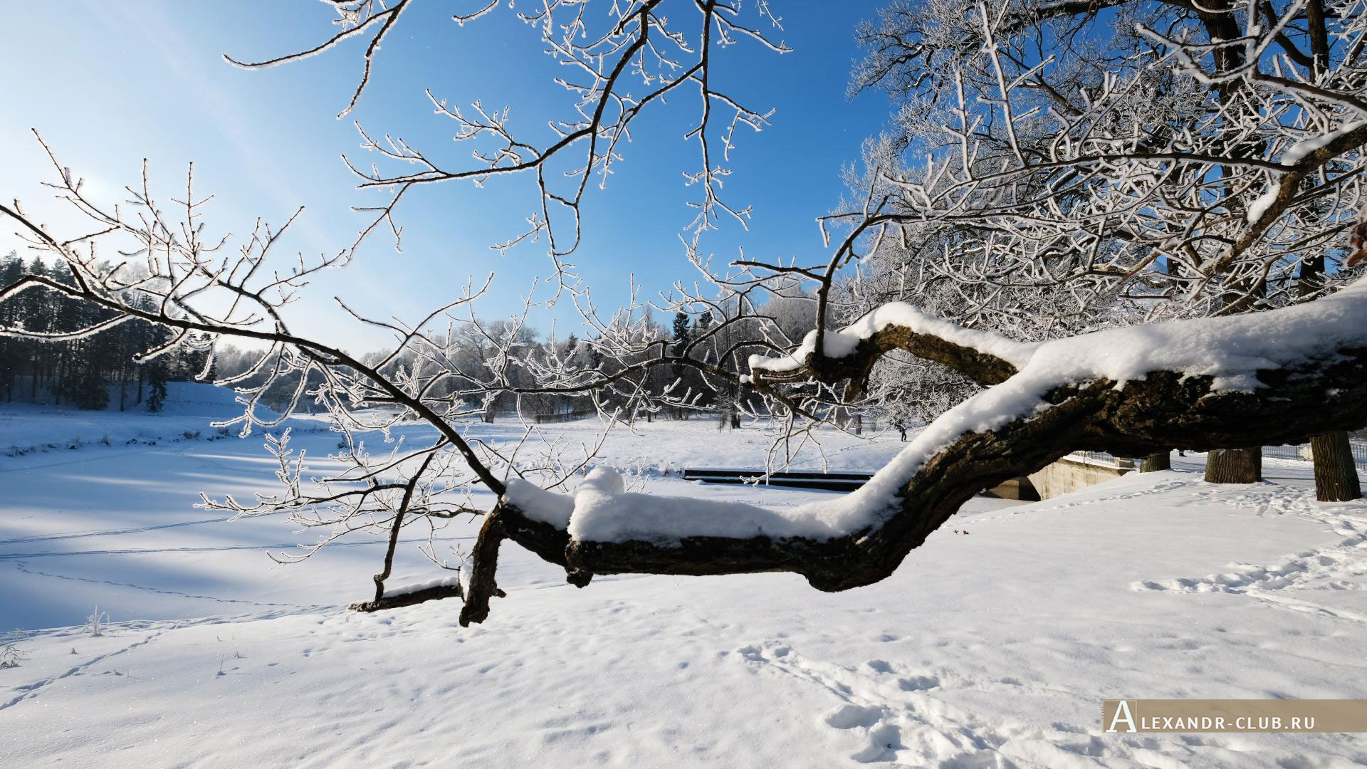 Павловск, зима, Павловский парк