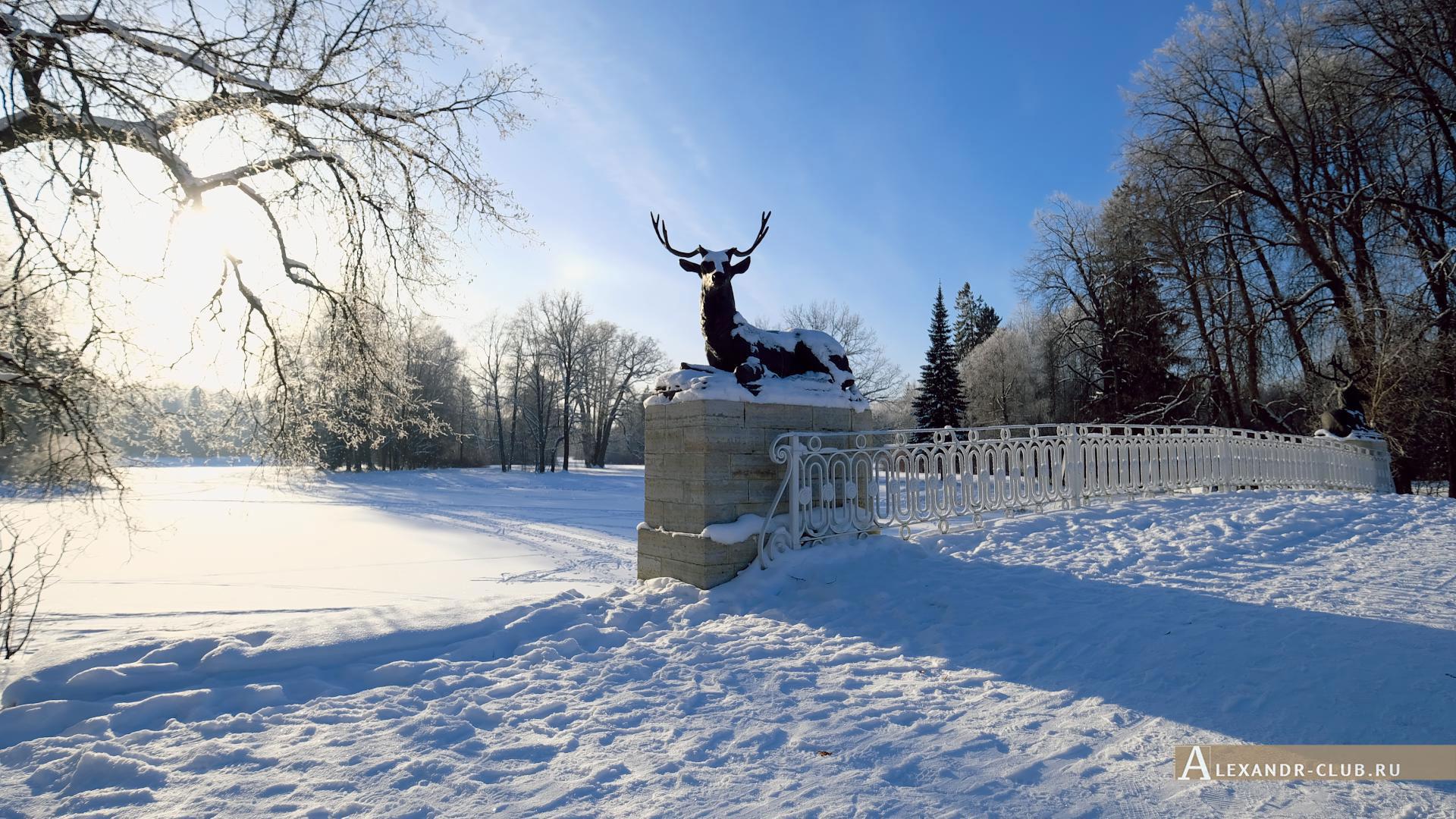 Павловск, зима, Павловский парк, Олений мост